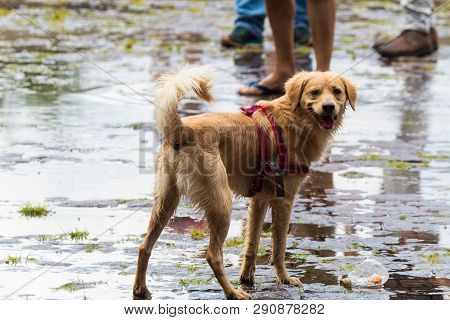 A Dog Playing On The Wet Streets