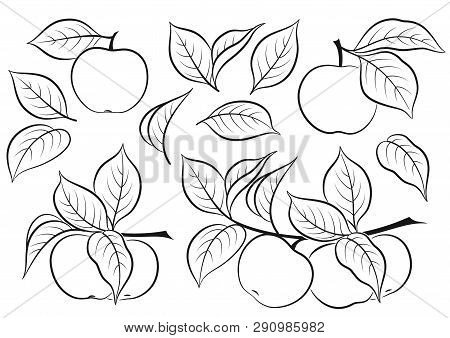 Set Of Plant Brunches With Apples, Fruits And Leaves, Black Pictograms Isolated On White. Vector