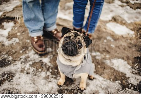 Dog Walking With Owner Outdoor Snowy In Winter. Lovely Couple In The Winter Field On A Walk With The