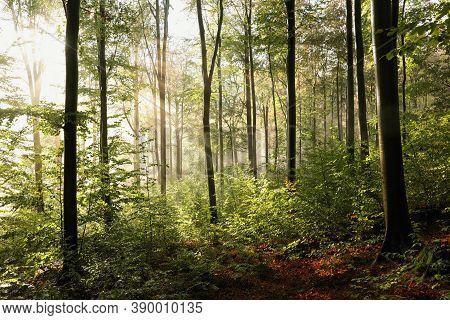 Autumn forest Nature woods Nature sunset Nature trees fall background landscape Nature landscape Nature landscape leaves Nature landscape Nature background Nature landscape Nature background landscape Nature background Nature landscape Nature background.