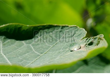 Dewdrop On The Surface Of A Leaf.