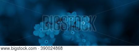 Toned Defocused Image Of Forget-me-not Flowers. Blue Color. Soft Selective Focus. Floral Banner For