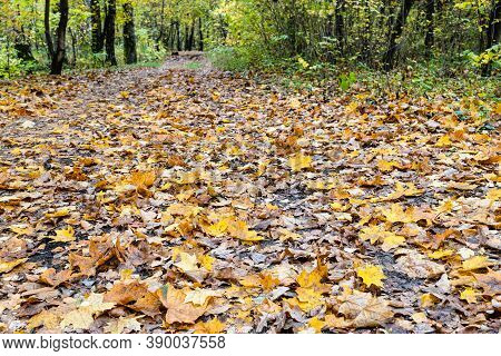Surface Of Pathway Covered By Yellow Fallen Leaves In City Park On Autumn Day