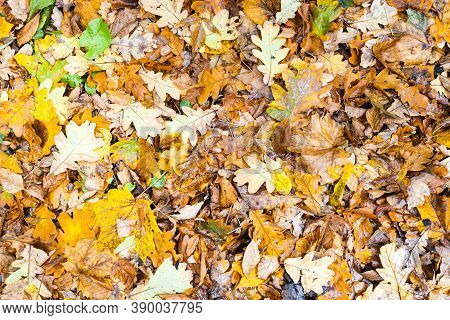 Top View Of Wet Yellow Fallen Leaves After Rain In City Park In Autumn