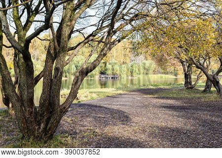 Old Bare Willow Trees On Shore Of Pond In City Park On Sunny Autumn Day