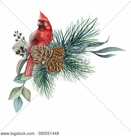 Winter Floral Rustic Arrangement Watercolor Illustration. Hand Drawn Natural Decor With Red Cardinal