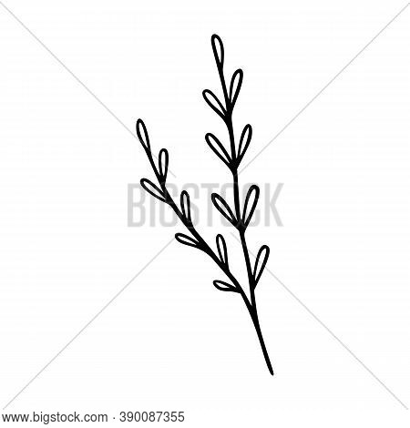 Wildflower Outline Hand Drawn Element. Herbs Doodle Botanical Icon. Herbal And Meadow Plant, Grass.