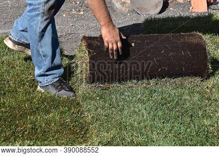 A Worker Unrolls New Sod Unto An Instant Backyard