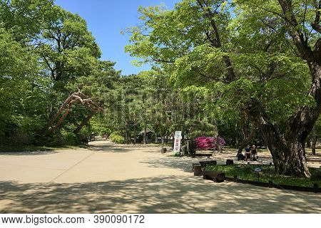 Seoul, South Korea - May 2, 2017: Huwon park (Secret Garden) in spring. Changdeokgung palace one of the Five Grand Palaces of the Joseon Dynasty.