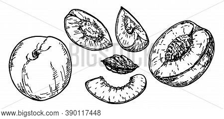Hand Drawn Sketch Style Peach Fruit Set. Vintage Eco Food Vector Illustration. Ripe Whole Peach And