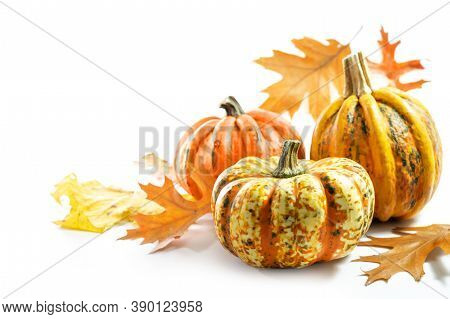Food Pumpkins Or Squashes And Colored Autumn Leaves, Greeting Card For Halloween Or Thanksgiving On