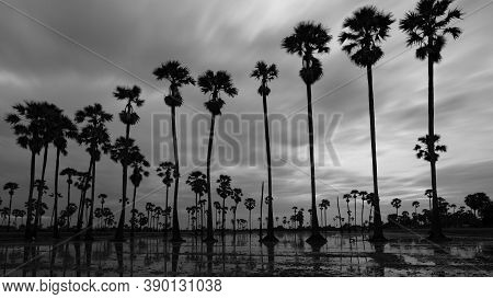 Silhouette Of Palm Trees In Black And White Photo
