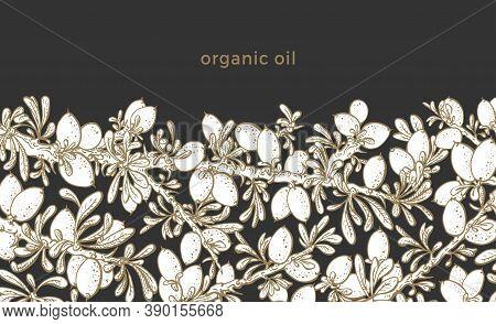 Argan Plant. Vector Illustration On White Background. Art Vintage Pattern. Botanical Branch, Graphic