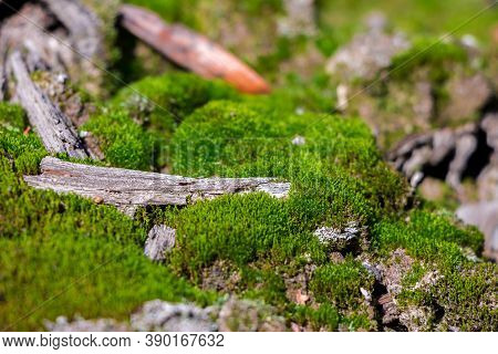 Moss On Which A Dry Twig Lies, Renewal Of Nature