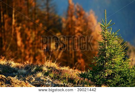 Burnt forest in Cozia National Park, Romania, Europe