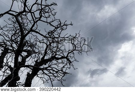 Silhouette Dead Tree On Dark Dramatic Sky. Dark Sky And Dead Tree Background For Halloween Day. Dead