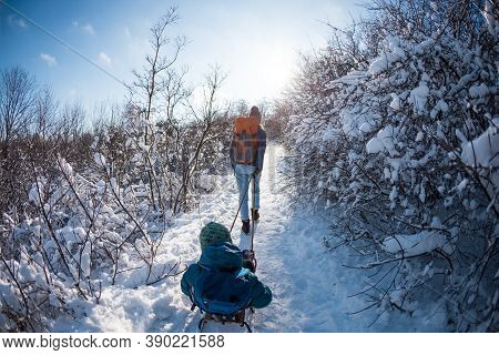 A Woman Pulls A Sled With A Child, Mother Walks With Her Son Through A Snowy Forest, Winter Walk In