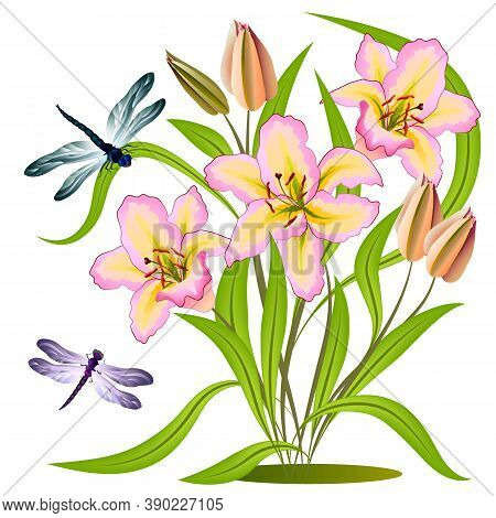 Flowers And Dragonflies In Color Illustration.multi-colored Dragonflies And Lilies In A Color Illust