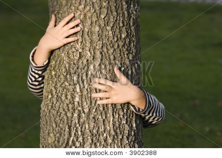 Huging A Tree