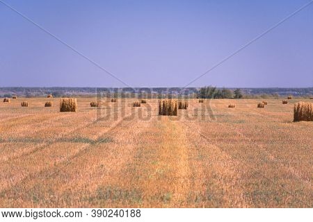 Haystacks On The Field. Summer Rural Landscape. Landscape Of The Edge Of A Field With Wheat Or Barle