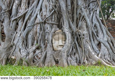 Wonders Of Nature,the Head Of The Sandstone Buddha Image In Tree Roots At Wat Mahathat Ayutthaya Tha