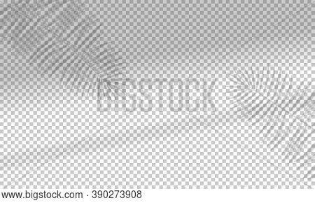 Vector Illustration With Shadow Overlays On Transparent Background. Organic And Window Frame Shadows