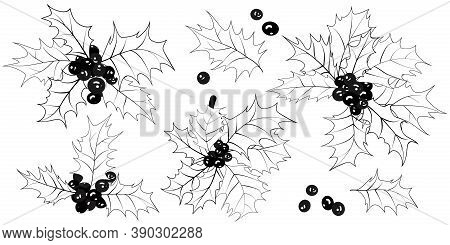 Christmas Holly. Set Of Sprigs, Leaves, Holly Berries Isolated On White Background. Xmas Symbol. Bla