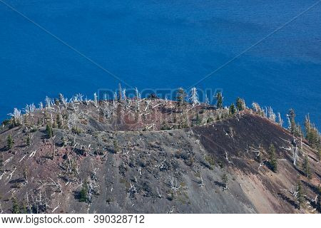The Top Of Wizard Island With A Trail Leading Up To The Crater Over Cinder Rocks And Past Dead Trees