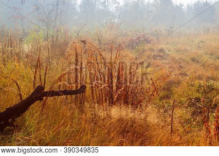 Glade Covered With Different Tall Withered Grass At Foggy Morning In Late Fall