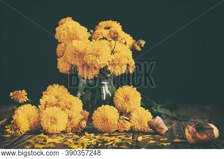 Bouquet Of Beautiful Yellow Chrysanthemums On Wood Table On Black Background. Autumn Floral Still Li