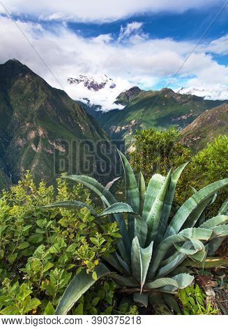 Andes Mountains And Agave, Apurimac River Valley View From Choquequirao Trekking Trail, Cuzco Area,