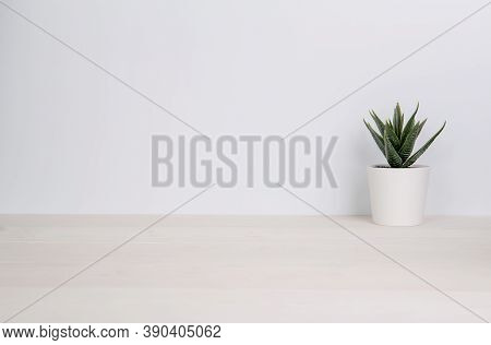 Mini Plant Succulent On Wooden White Desk, Little Plant And Leaf In Potted On Table, Copy Space, Nob