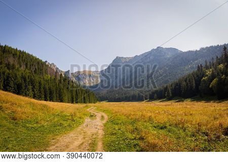 Mountain Glade Wielka Polana Malolacka With Pine Trees And Spruces In Autumn, With Rocky Tatra Mount
