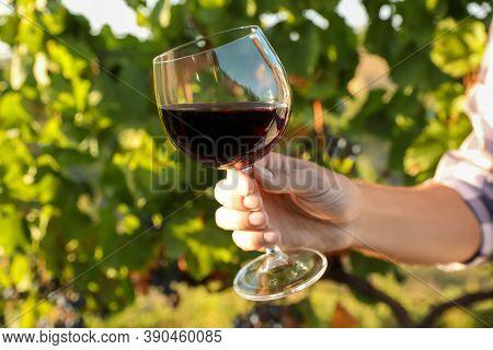 Man Holding Glass Of Wine In Vineyard, Closeup