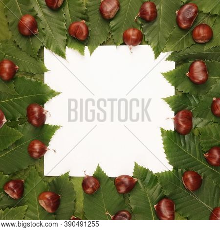 Trendy text frame sweet chestnuts and green leaves background