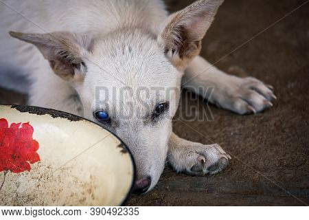 small puppy bind with a cataract in one eye