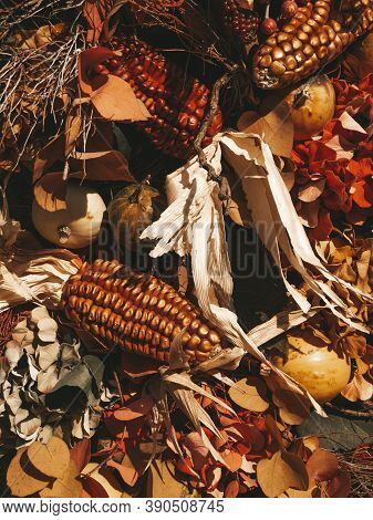 Thanksgiving Still Life Decorations. Autumn Or Fall Composition. Fall Leaves, Berries, Corn And Pump