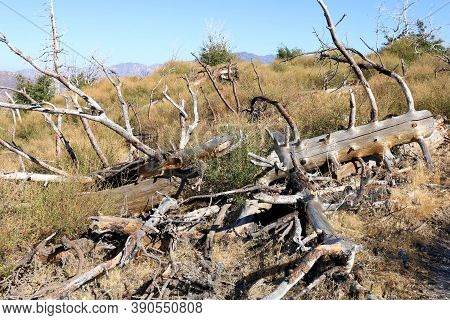 Alpine Meadow With Fallen Down Pine Trees On A Plateau At A Burn Area Caused From A Past Wildfire Ta