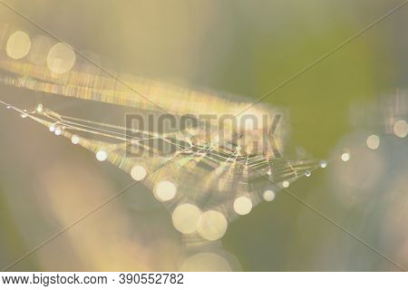 Abstract Blurry Pastel Background With Bokeh. Blurred Cobwebs In The Dew. Abstract With Shiny Dew Dr