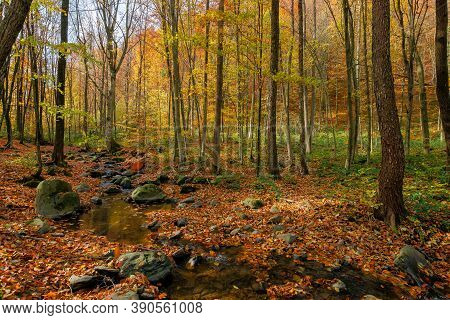 Brook In The Forest. Wonderful Nature Scenery On A Sunny Autumnal Day. Trees In Colorful Foliage. Wa