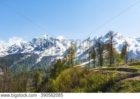 Green Forest On The Background Of Snowy Mountains In Sochi. The Caucasus Range In Spring In April. B