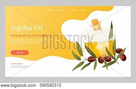 Glassware Golden Liquid, Jojoba Oil. Branch With Green Leaves And Brown Drupes Near Glass Bottle, Ve