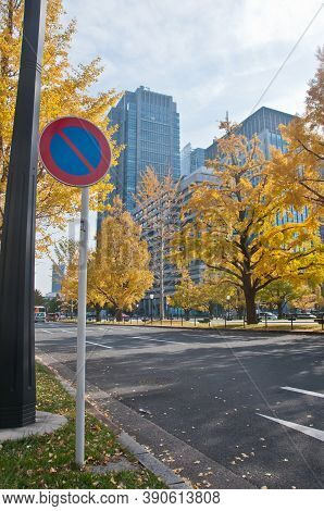 Traffic Sign Of No Parking And Golden Leaves Foliage Gingko Maidenhair Trees In Front Of High-rise C