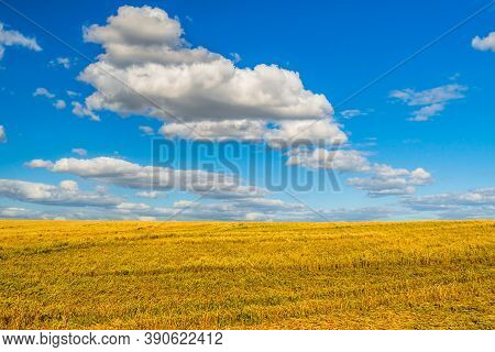 Cropped Wheat Ears On The Field After Harvest. A Field Of Golden Wheat And Blue Sky. Agricultural Fi