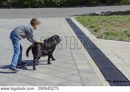 Boy Plays With His Labrador Dog Outdoors. An Eight Year Old Boy And Ten Year Old Black Female Dog. W