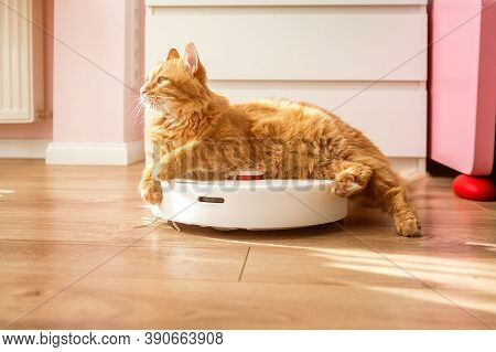 Cat Sitting On Robotic Vacuum Cleaner. White Vacuum Cleaner Is Working On The Floor With Calm Pet Sl