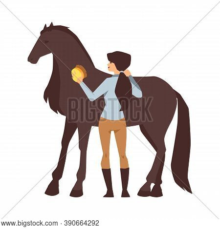 Young Woman Cleaning A Thoroughbred Chestnut Horse A Vector Isolated Illustration