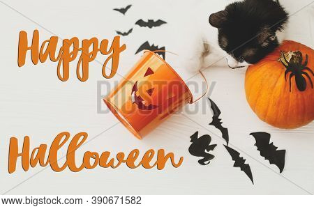 Happy Halloween Text On Cat Paws Holding Jack O Lantern Candy Pail On White Background With Pumpkin,