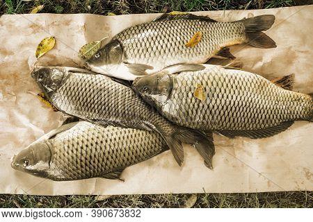 Fresh River Fish Carp Caught In The River