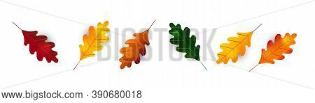 Autumn Leaf Fall. Colorful Leaves. Oak Leaf. Detailed Tree Foliage Vector November Seasonal Backgrou